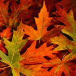 fall_leaves-150x150